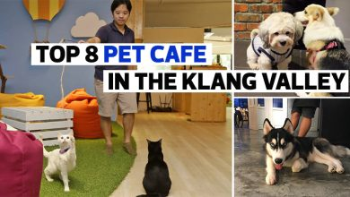 Photo of 8 Pet Cafe In The Klang Valley All Animal Lovers Should Visit